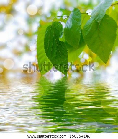 Silhouette of branch on water. Horizontal version of file - stock photo