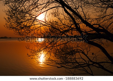 Silhouette of branching tree over lake at sunset in spring evening - stock photo