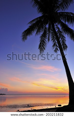 Silhouette Of Coconut Tree During Sunrise/Sunset - stock photo