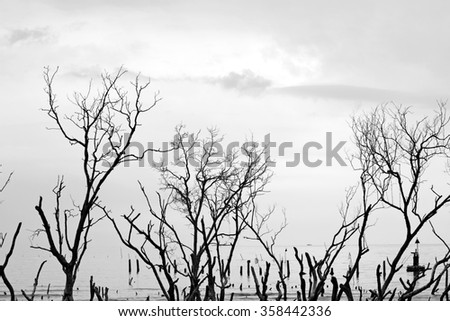Silhouette of dead mangrove trees on a tropical coastline, processed in monochrome.  - stock photo
