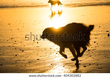 Silhouette of dogs running at the beach