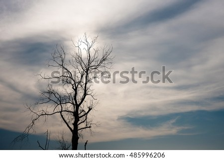 Silhouette of dried tree with white sky