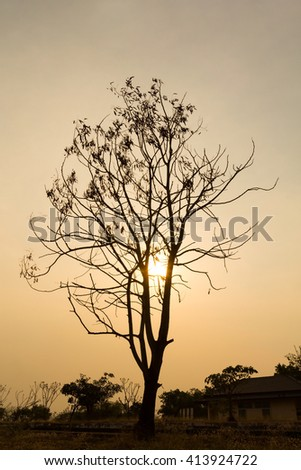 Silhouette of dry tree at sunset.