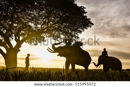 Silhouette of elephants.