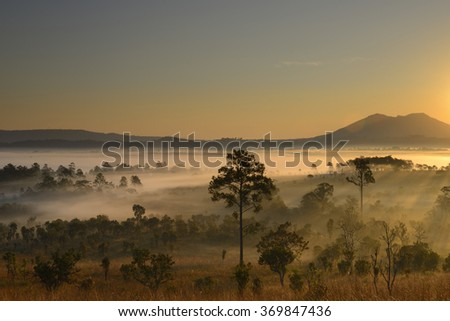 Silhouette of  Forest at  National Park north Thailand,Beautiful morning scene in the forest, View to the jungle,autumn forest trees. nature green wood sunlight backgrounds,beautiful  forest asia