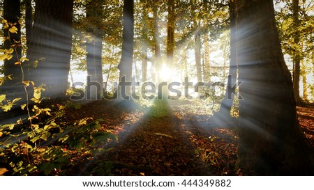 silhouette of forest trees and sun light beams. beautiful nature background - stock photo