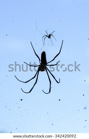 silhouette of golden silk orb with blue background