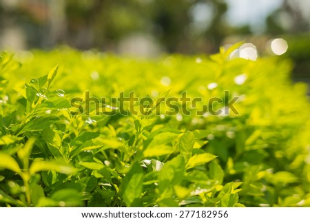 Silhouette of green leaf background with bokeh, shallow depth of field - stock photo