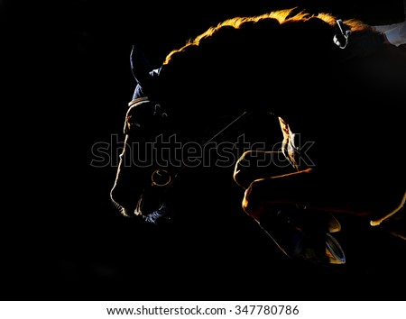 Silhouette of jumping horse on black background. Back light - stock photo