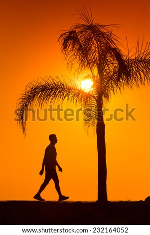 silhouette of man walking beside palm tree on the sunset    - stock photo