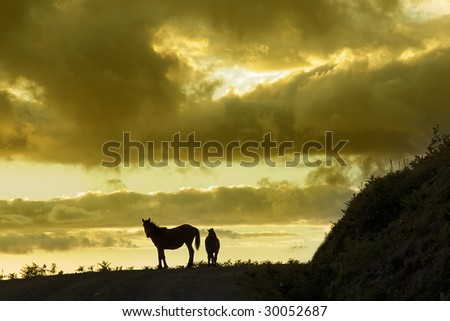 silhouette of mother and horse breeding