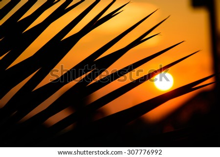 Silhouette of palm leaves against the backdrop of the setting sun - stock photo