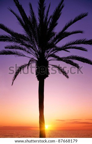 Silhouette of palm tree and colorful sunset.