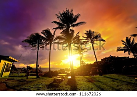Silhouette of palm tree in sunset background
