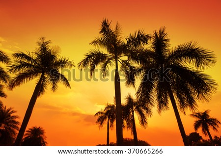 Silhouette of palm trees at sunset - stock photo