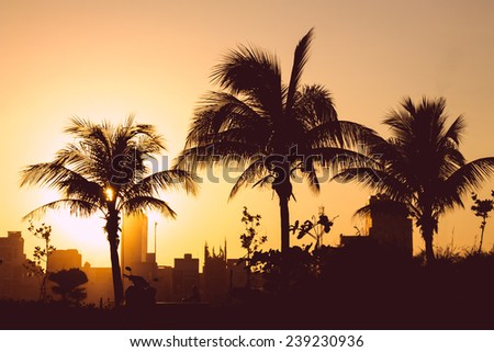 Silhouette of palm trees on sunset