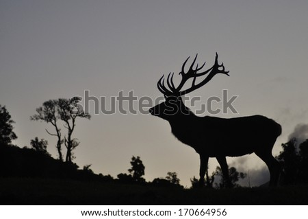 Silhouette of red deer stag, West Coast, South Island, New Zealand - stock photo