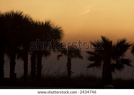 Silhouette of row of palm trees and tall grasses with orange sky as background