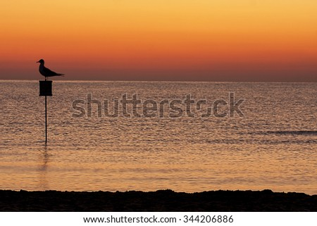 Silhouette of seagull on sign at sunrise or sunset at the sea - stock photo
