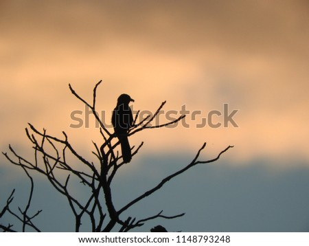 stock-photo-silhouette-of-the-bird-and-s