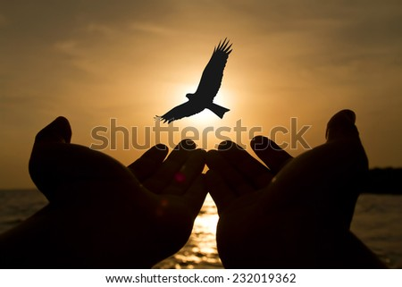Silhouette of the birds on hand flying to the sun by red sunset over the ocean - stock photo