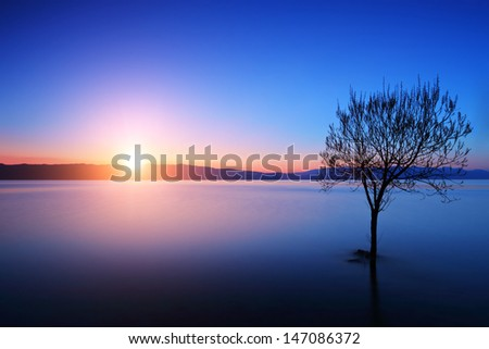 Silhouette of tree in Ohrid lake, Macedonia at sunset - stock photo