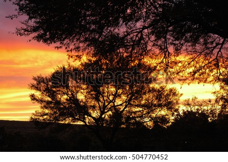 Silhouette of tree in the bushveld of South Africa
