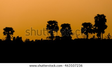 Silhouette of tree in the field on sunset,orange tone