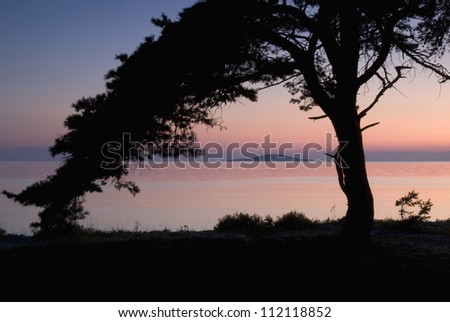Silhouette of tree on shore at dusk