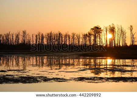 Silhouette of Trees at Sunrise Reflecting in Water - stock photo