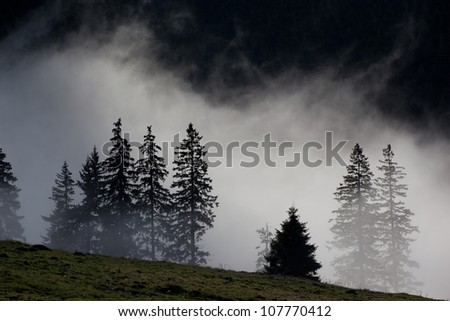 Silhouette of trees in mist - stock photo