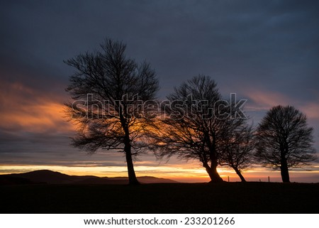 silhouette of trees in sunset sky