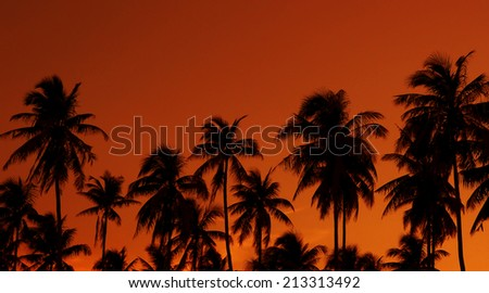 Silhouette of tropical tree