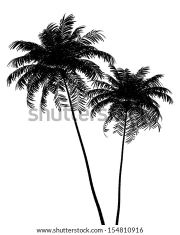 silhouette of two Areca palm trees isolated on white background - stock photo