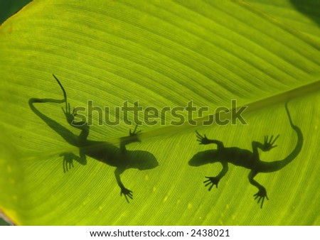 Silhouette of two lizards - stock photo