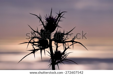 Silhouette of wild thistle at sunrise, image with color effect - stock photo