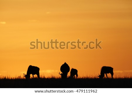 Silhouette of Wildebeest during sunset at Masai Mara