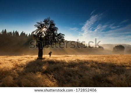 silhouette of woman standing under tree in forest with fog - stock photo