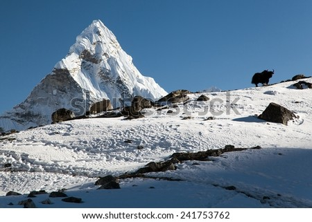 Silhouette of yak on the ridge and Ama Dablam - way to Everest base camp - Nepal - stock photo