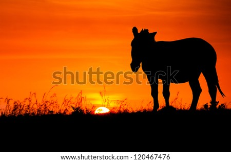 Silhouette of zebra against the African sunset