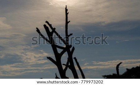Silhouette off tree with background of beautiful blue sky.
