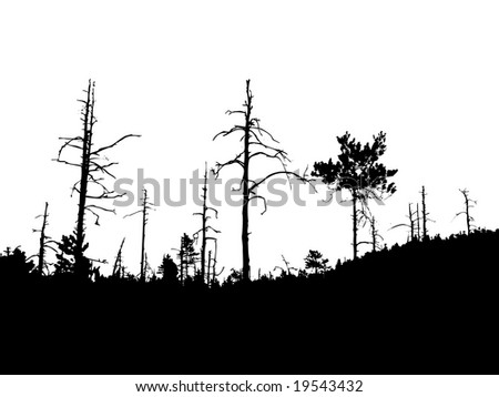 silhouette old dry wood - stock photo