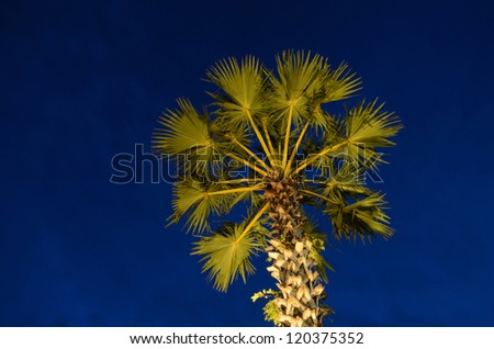 Silhouette palm tree at koh yao.SongKhla - stock photo