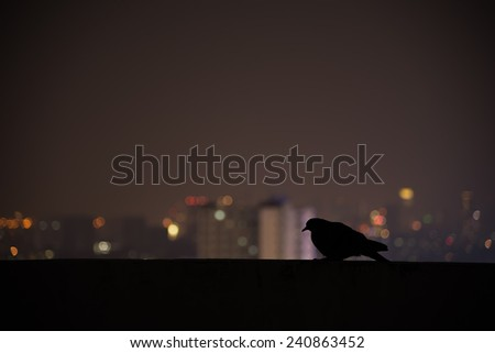 Silhouette Pegion in city scape background at night - stock photo