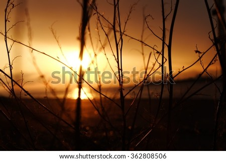 silhouette photography - stock photo