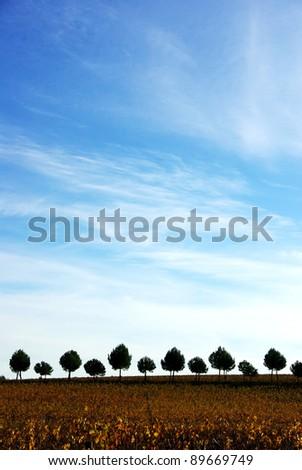 Silhouette row of pines tree - stock photo