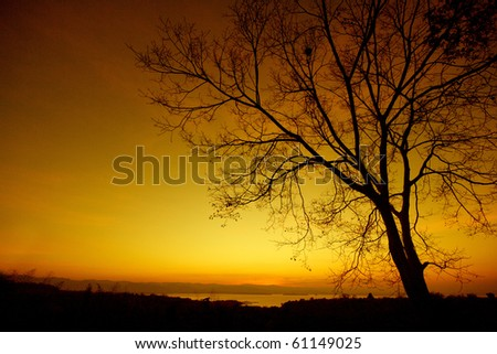 silhouette tree at sunset on yelow background