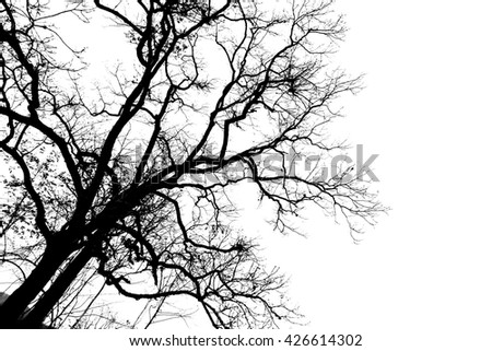 Silhouette tree black shadow tree over white by sunset with leaves less branches tree in the forest near the hill - stock photo