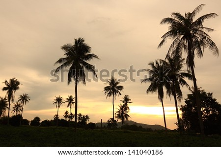 Silhouetted of Coconut Tree during Sunrise.