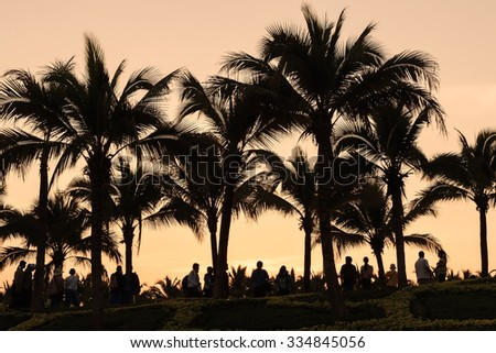 Silhouetted of coconut tree during sunset.